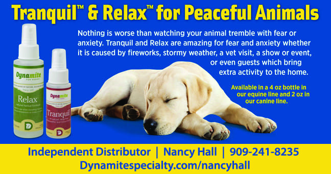 TranquilRelax_dynamitePets-nancy (1)