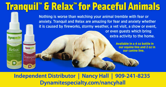 Dynamite Relax And Tranquil For Your Pets